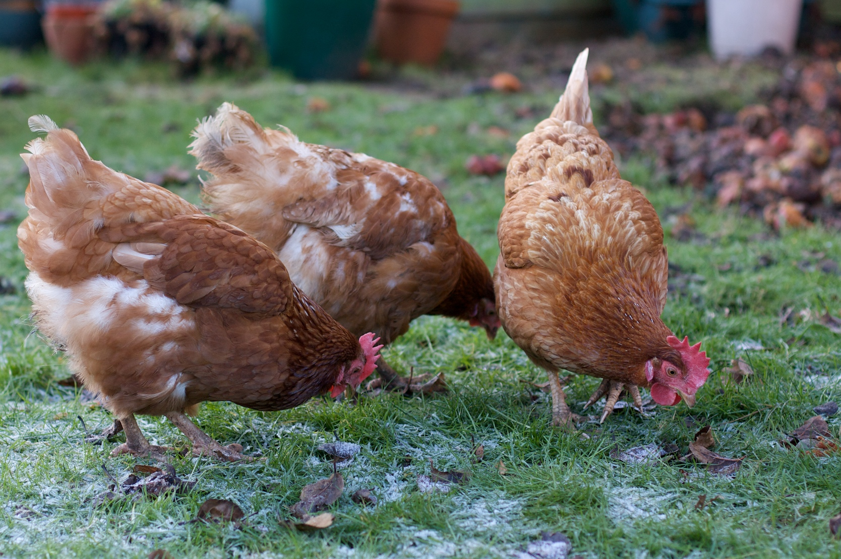 Winter Tips To Keep Your Ens Cosy That Are Healthy And