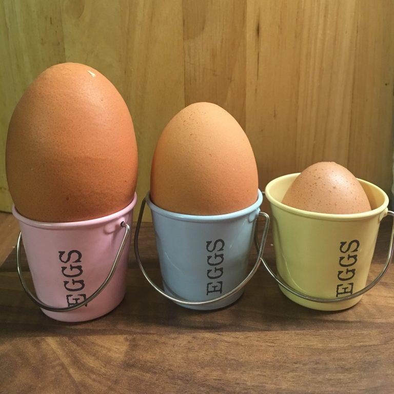 soft shell egg shell