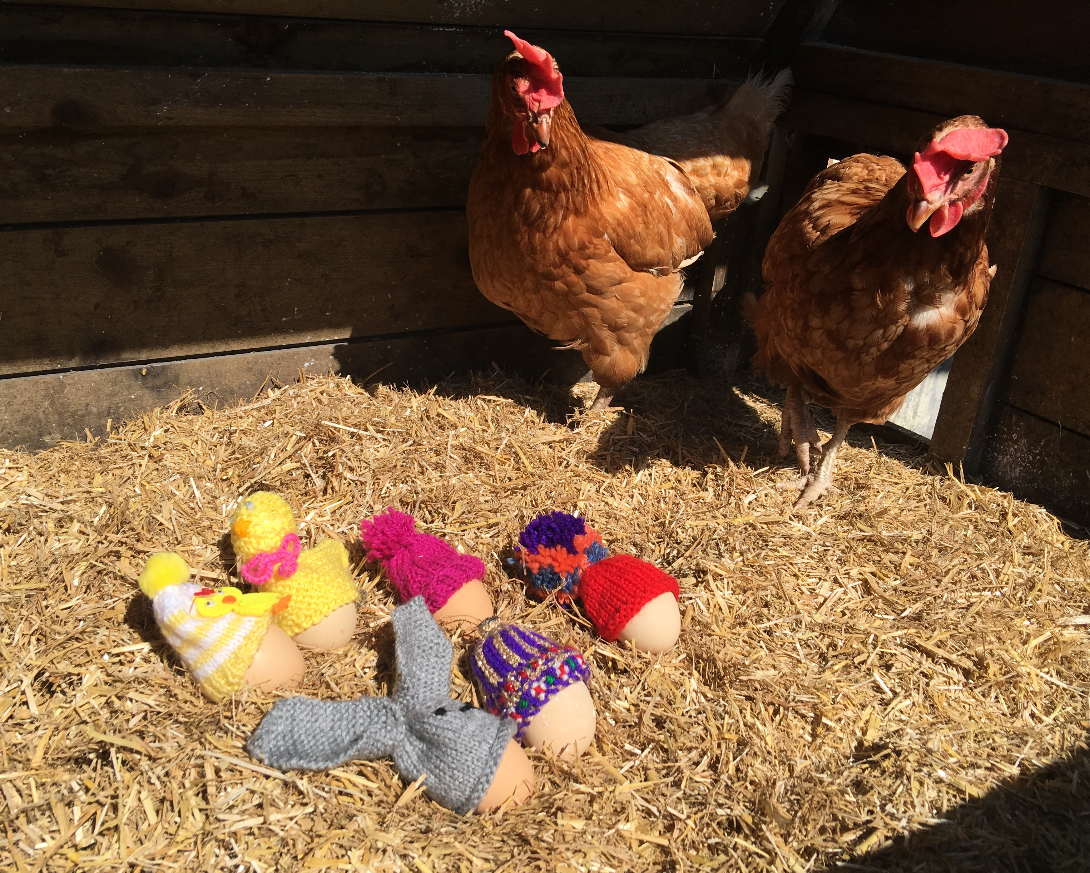 WANTED: egg cosies! | BHWT