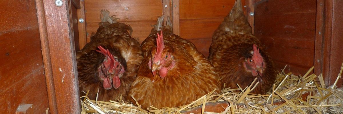 Merging Flocks