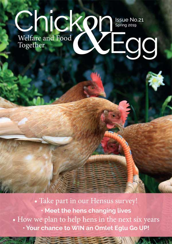 Chicken & Egg issue 21