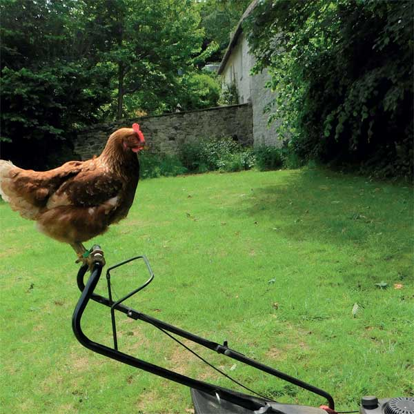 Hen on Lawnmower