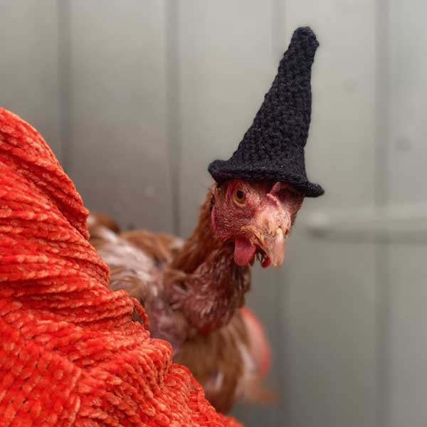 Hen With Witches Hat On