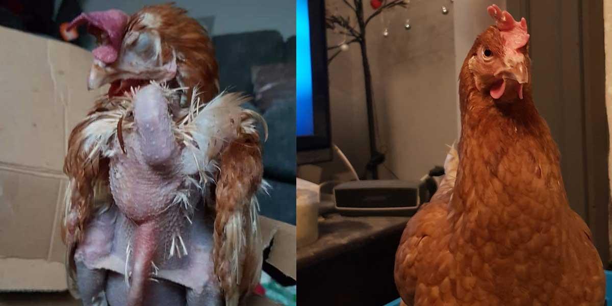 Poppy's Transformation