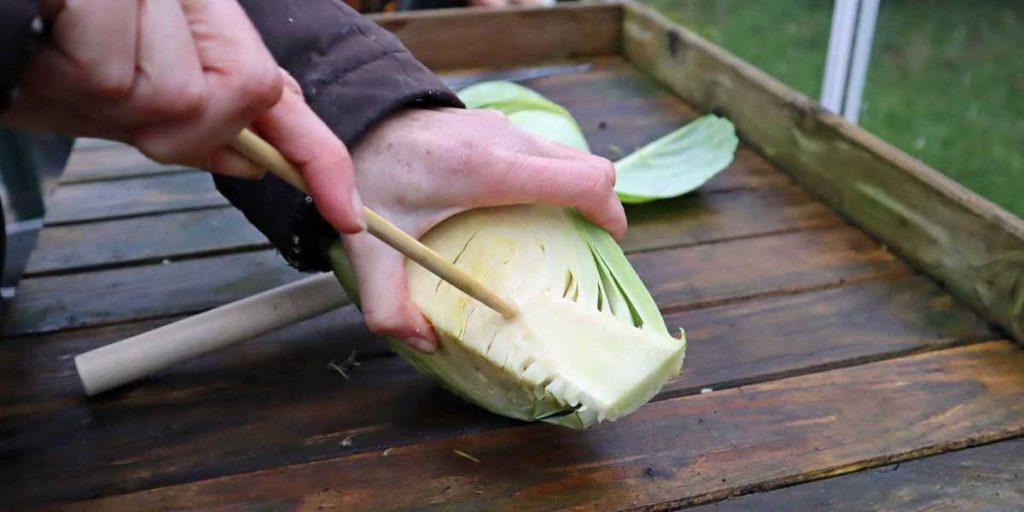 Wreath Cabbage Piercing