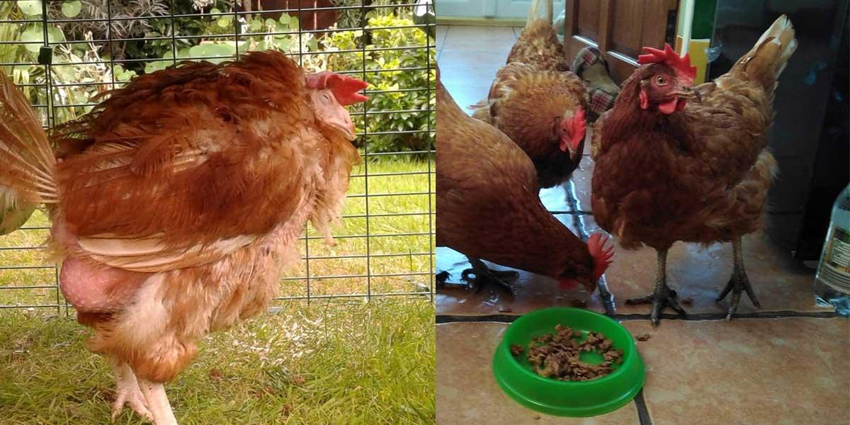Agatha's Transformation