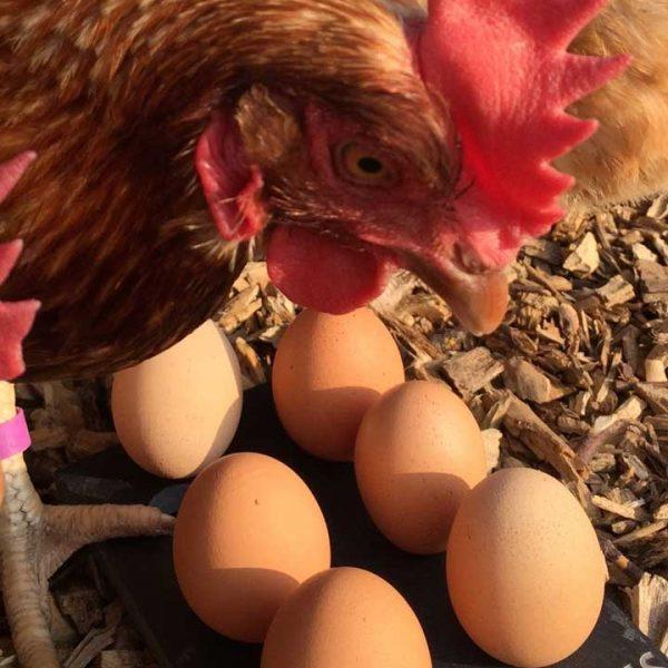 home-egg-club.jpg
